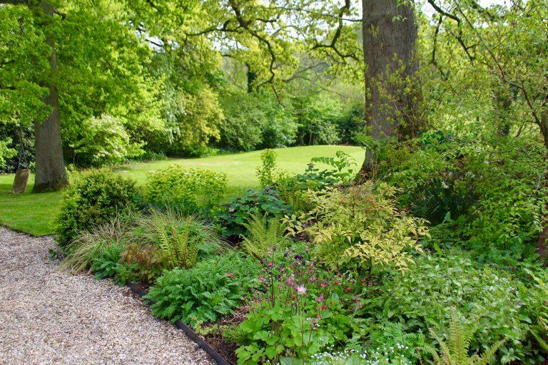 Hampshire Woodland
